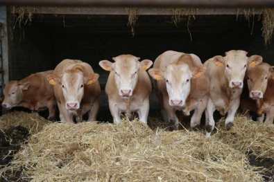 Bijzondere Overnachting Slapen bij de boer op de Brabantse Hei in Hooge Mierde16