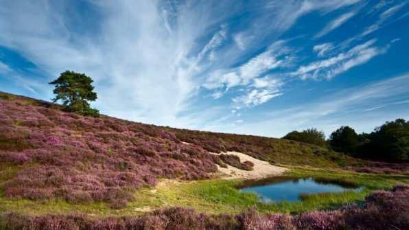 Bijzondere Overnachting Gelderland Uddel Wellness vakantiepark de Eikensingel2