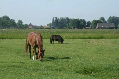 Bijzondere Overnachting Slapen bij de Boer op De Groene Hoeve Wijdenes boerderij Noord-Holland11