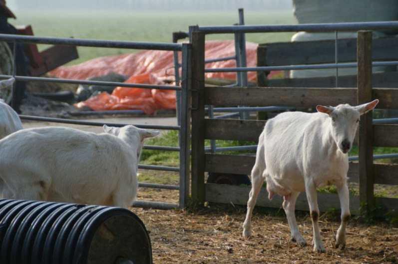 Bijzondere Overnachting Slapen bij de Boer op De Groene Hoeve Wijdenes boerderij Noord-Holland16