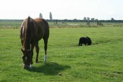 Bijzondere Overnachting Slapen bij de Boer op De Groene Hoeve Wijdenes boerderij Noord-Holland4