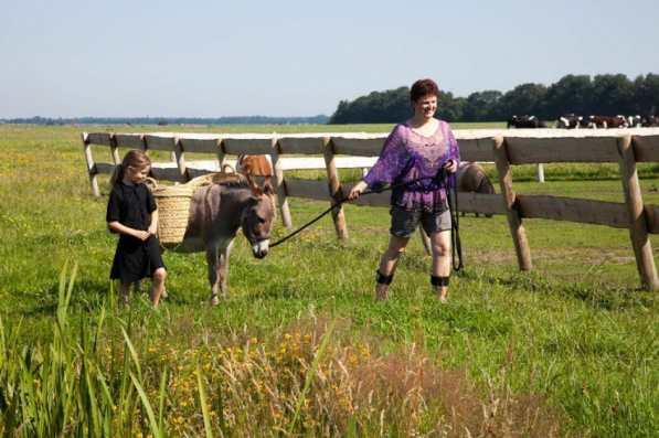 Bijzondere Overnachting Slapen bij de boer Boerderij de Kalverweide Steenwijk Drenthe16