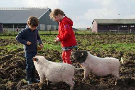 Slapen bij de Boer op boerderij de Kalverweide in Drenthe