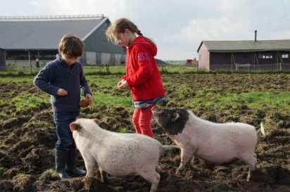 Bijzondere Overnachting Slapen bij de boer Boerderij de Kalverweide Steenwijk Drenthe8