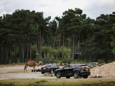 Bijzondere Overnachting Origineel Overnachting Vakantiepark De Beekse Bergen Hilvarenbeek18