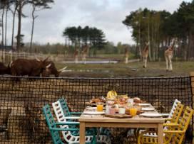 Bijzondere-Overnachting-Safaripark-Resort-De-Beekse-Bergen-Hilvarenbeek-Brabant16