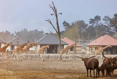 Bijzondere-Overnachting-Safaripark-Resort-De-Beekse-Bergen-Hilvarenbeek-Brabant21