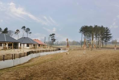 Bijzondere-Overnachting-Safaripark-Resort-De-Beekse-Bergen-Hilvarenbeek-Brabant23