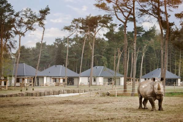 Bijzondere-Overnachting-Safaripark-Resort-De-Beekse-Bergen-Hilvarenbeek-Brabant27