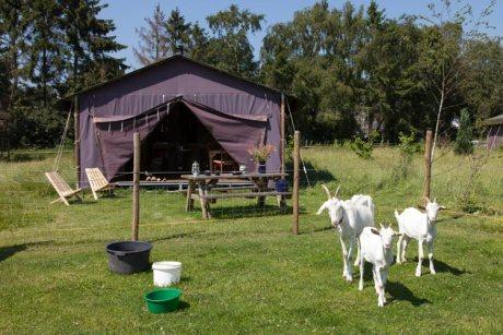Slapen op een boerderij met knuffelschuur in Drenthe