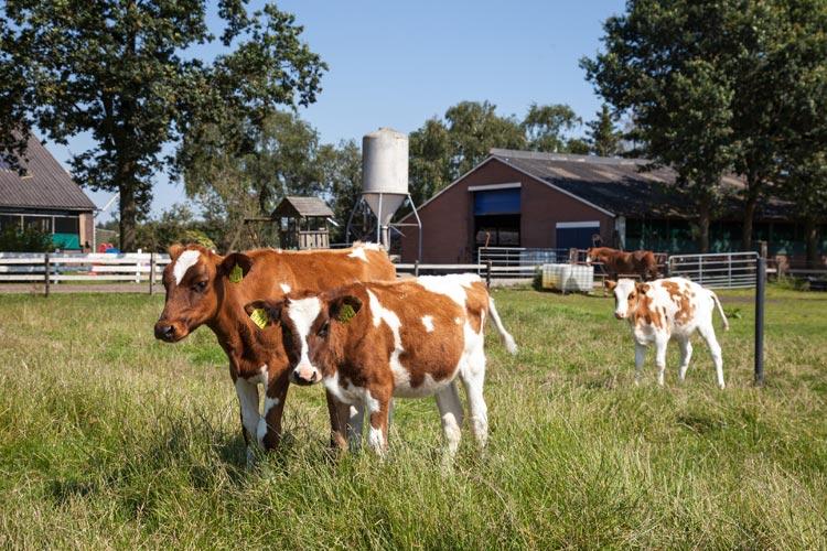 Bijzondere Overnachting Origineel Overnachten Slapen op een boerderij de Jobinghoeve in Grolloo met knuffelschuur in Drenthe9
