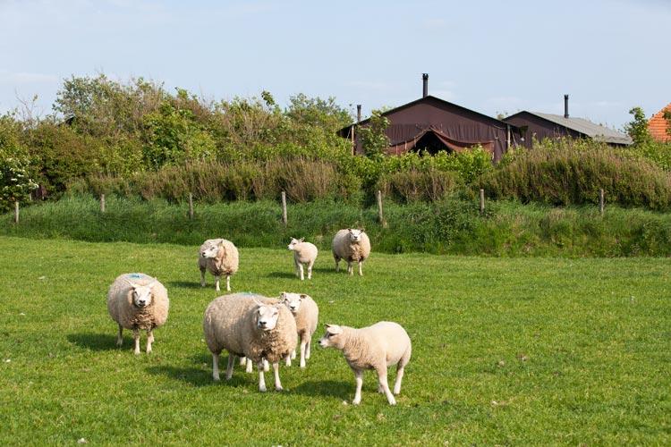 Bijzondere Overnachting Origineel Overnachten BoerenBed Slapen bij de Boer op schapenboerderij Texel1