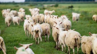 Bijzondere Overnachting Origineel Overnachten BoerenBed Slapen bij de Boer op schapenboerderij Texel14
