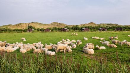 Bijzondere Overnachting Origineel Overnachten BoerenBed Slapen bij de Boer op schapenboerderij Texel9