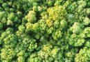 Türkiye'nin İlk EvdeKal Ormanı