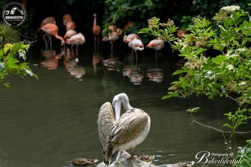 twycross-zoo-237