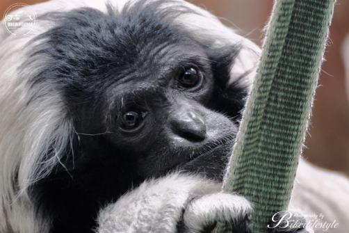 twycross-zoo-337a