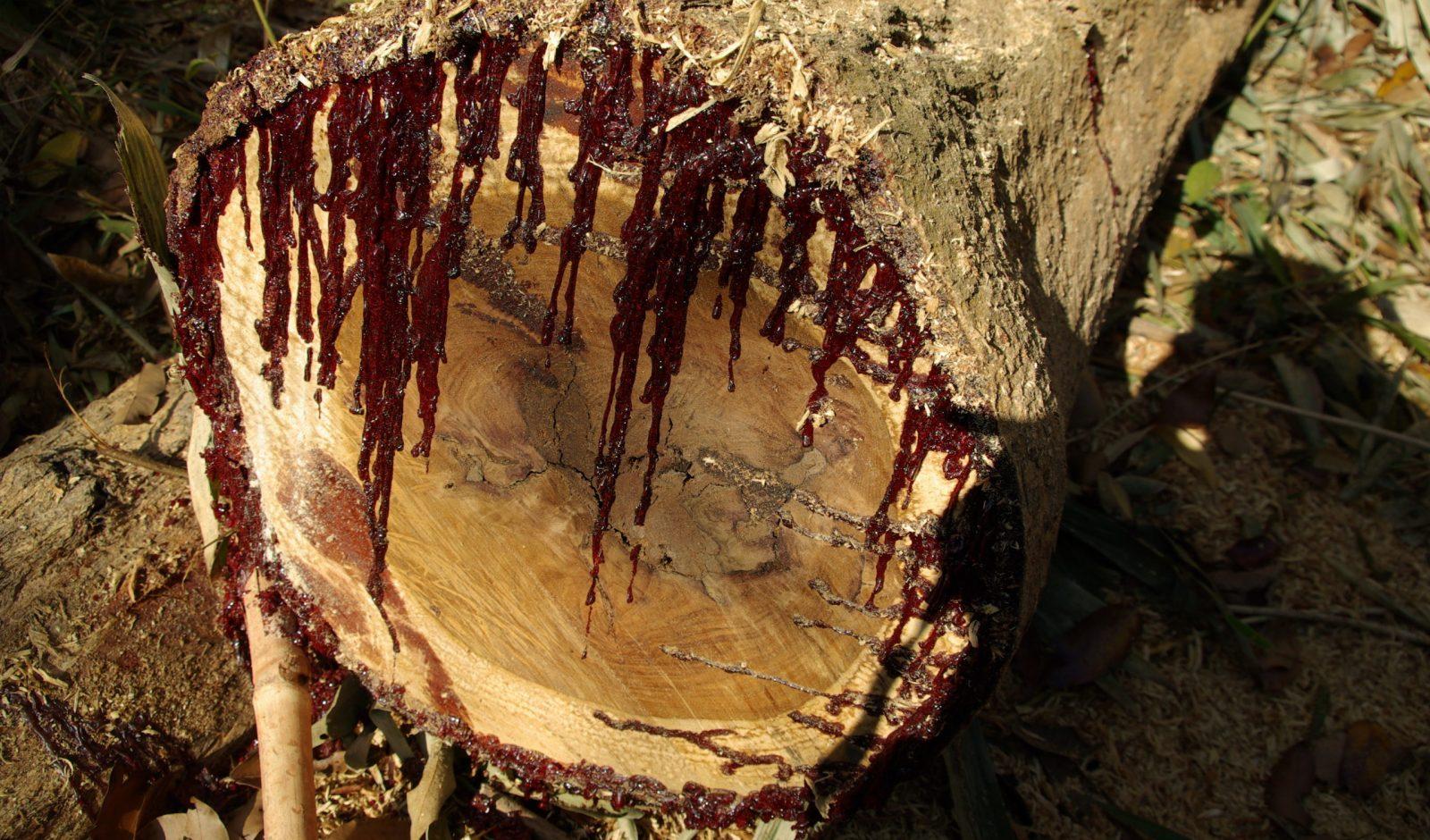 looks like real blood