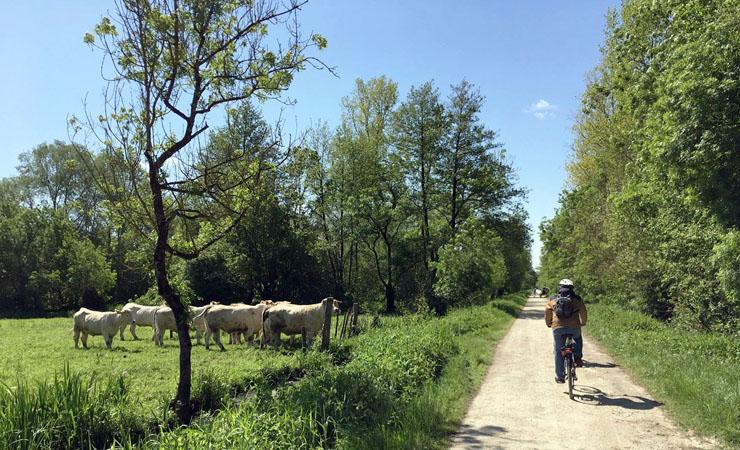 poitevin marsh by bike from niort to