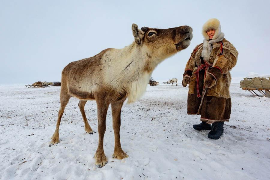 Как оленеводы Крайнего Севера выживают без душа, туалета и прочих благ цивилизации