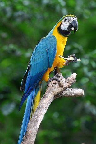 En Renkli Papağan Türleri