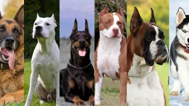 Tehlikeli Köpek Irkları