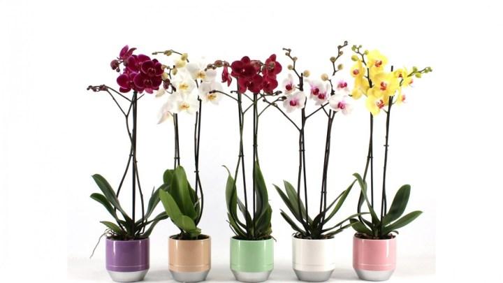 Orkide Ne Zaman Çiçek Açar ?