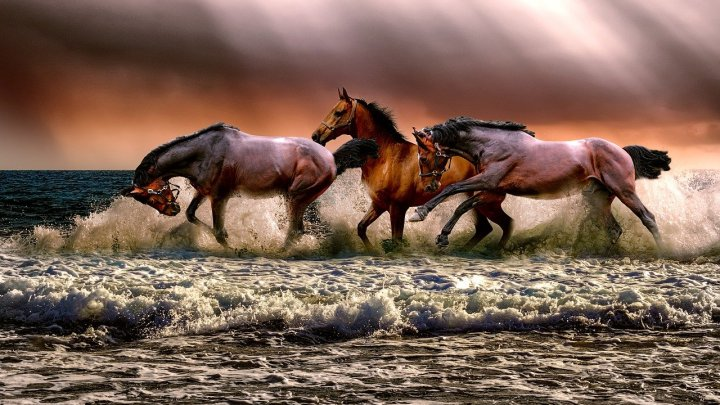 Atlar Hakkında Bilgi