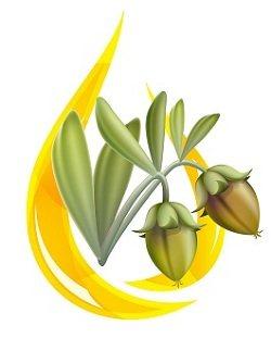 5601 jojoba oil plant - What Is Jojoba Oil?What Are The Benefits?
