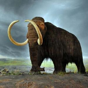 Woolly mammoth ingress 300x300 - Destroyed 6 Animal Species