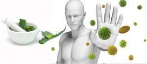 14770 bagisiklik sistemini guclendirmek icin 300x131 - 15 Food Strengthens The Immune System