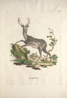 Descrizioni degli animali : corrispondenti alle cinquanta figure continente in questo Alessandri, Innocente, 1741-1803