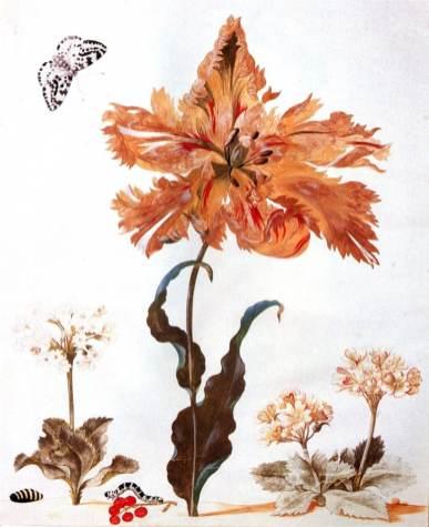 Lale ve kelebek çizimi, kelebeğin tırtıl evresi de görünmektedir.