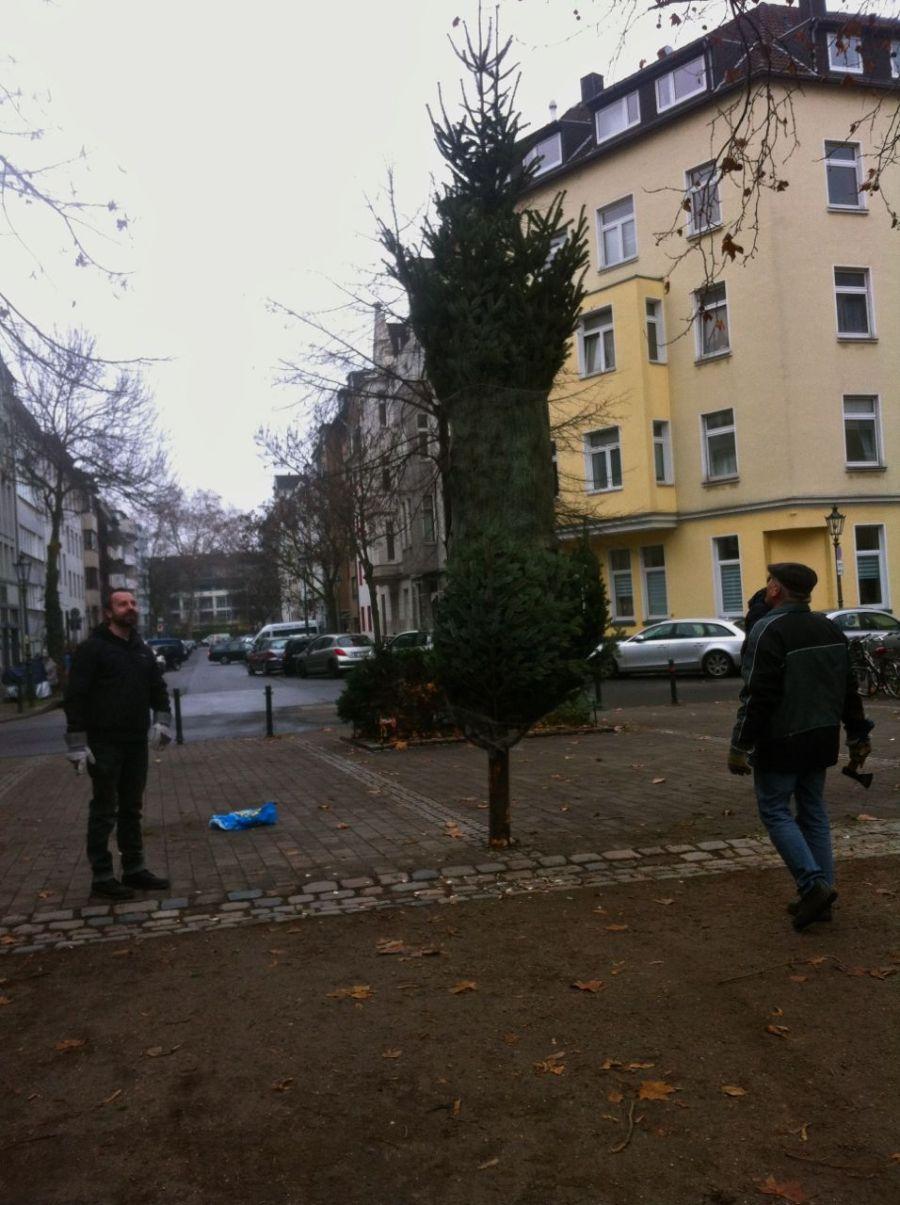 Das Friedensplätzchen hat wieder einen Weihnachtsbaum
