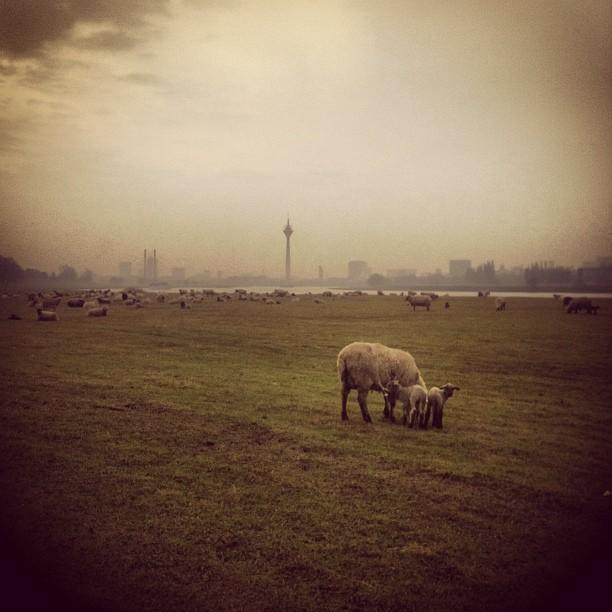 It's so fluffy. Morgens auf den Wiesen und Weiden vor der Stadt…