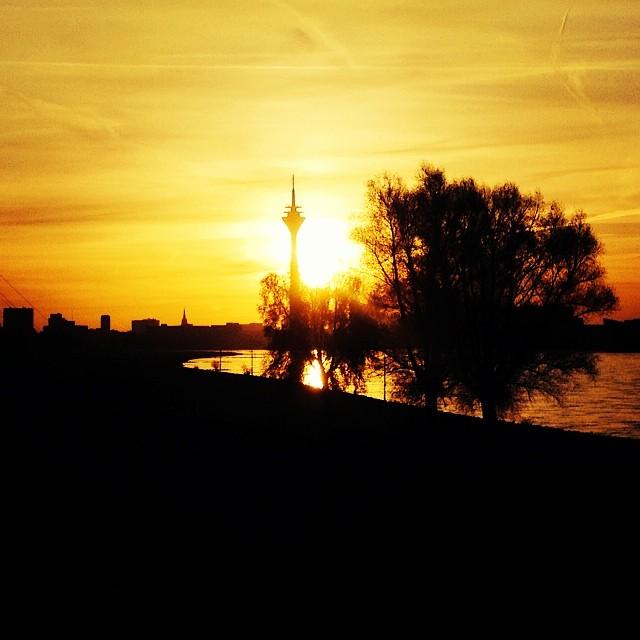 Morgens auf'm Deich am Rhein.