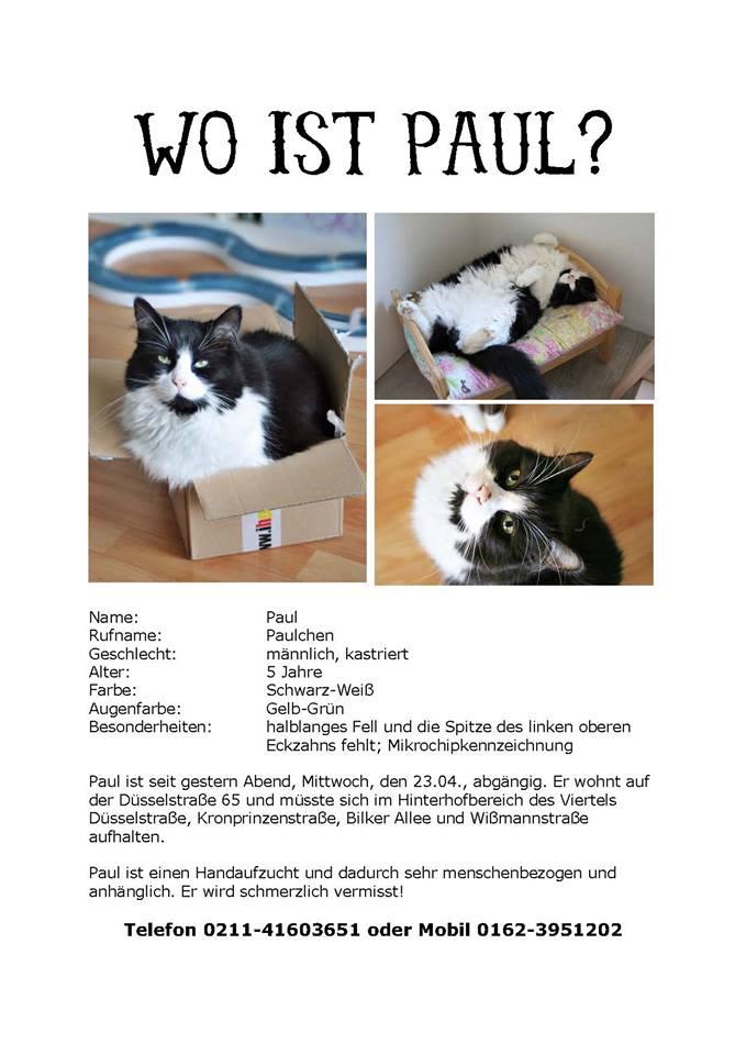 Wo ist Paul? – Katze auf der Düsselstraße entlaufen