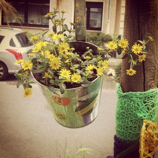 Blumendeko vorm Haus. Also den Bienen und Hummeln gefällt es ;-)