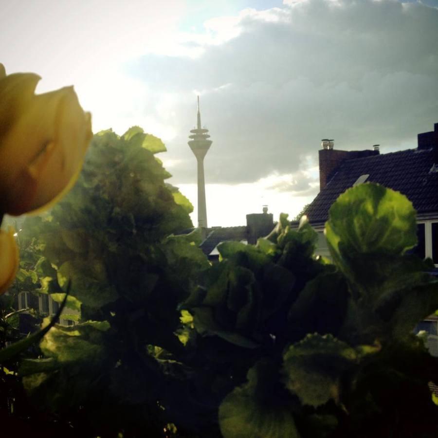 Der kleine urbane Guerilla Gärtner