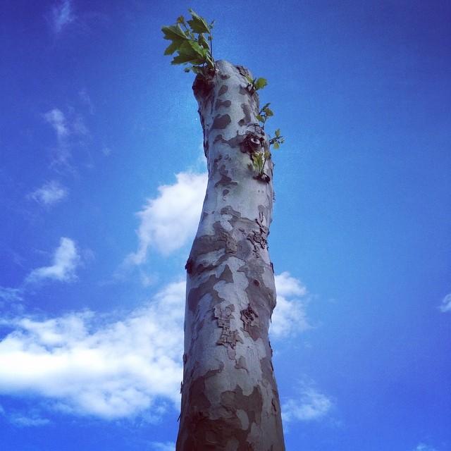 'Stay rude. Stay rebel.' Denkt sich der Baum mit Sturmschaden und treibt wieder aus...