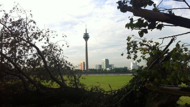 Spätfolgen von Ela –  140 Bäume sollen zusätzlich  gefällt werden