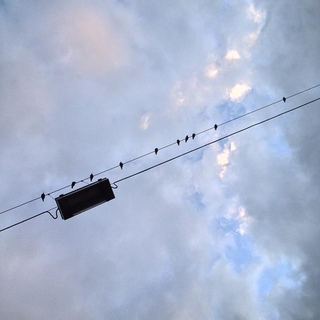 Gilt der Pilotenstreik eigentlich auch bei Zugvögeln?