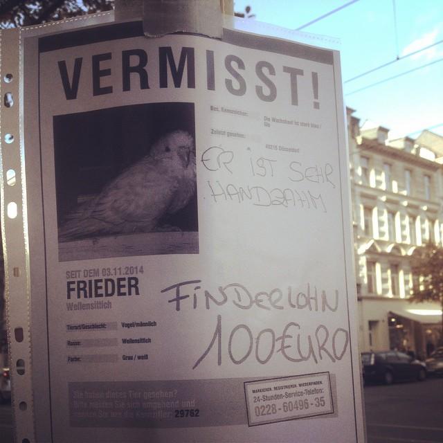 Wellensittich in Bilk / Unterbilk / Friedrichstadt vermisst…