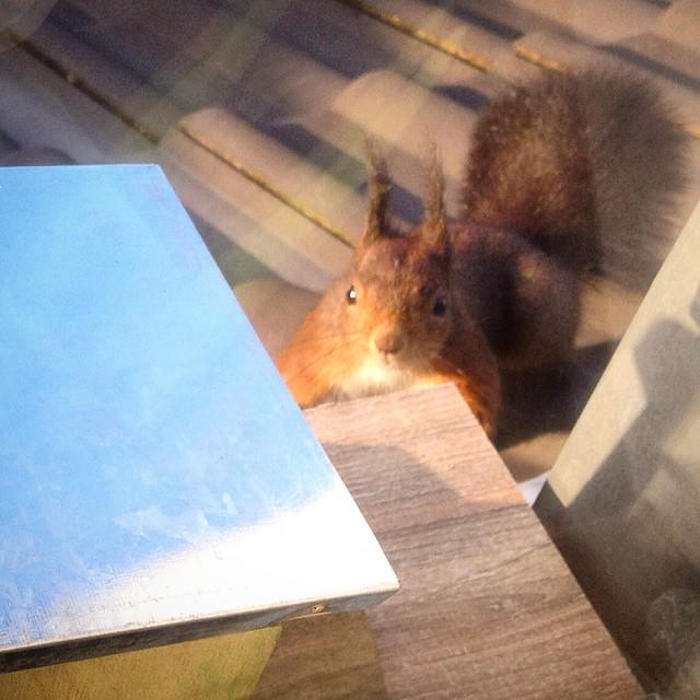 Unser Eichhörnchen ist ganz verwirrt - unser *ähm sein* NussOmat steht plötzlich auf der anderen Seite der Fensterbank und da stehen jetzt Kräuter im Weg ;-)