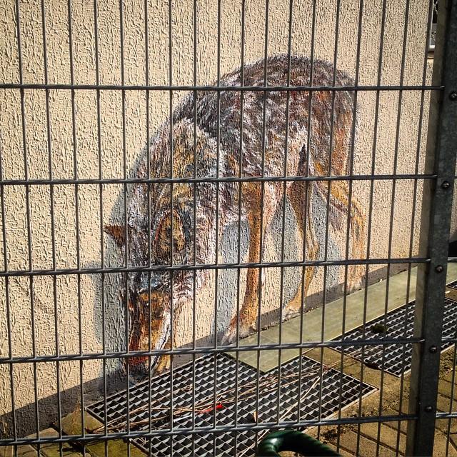 Ein kurzer Besuch des Wolf-Geheges in der Düsseldorfer Friedrichstadt lohnt sich immer…