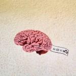 Beipackzettel fürs Gehirn