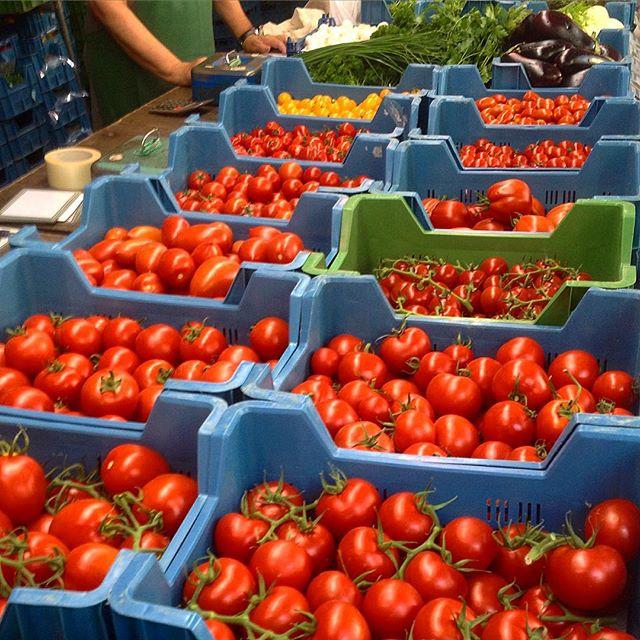 Tomaten soweit das Auge reicht (naja, nicht wirklich) :-)