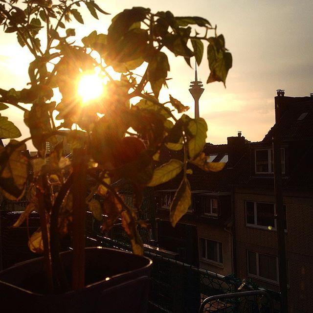 """Unterwegs im """"Blumenkasten Tomatenhain"""" ;-)"""