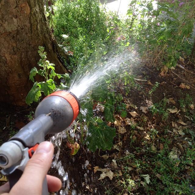 Auch Bäume habe Durst :-)