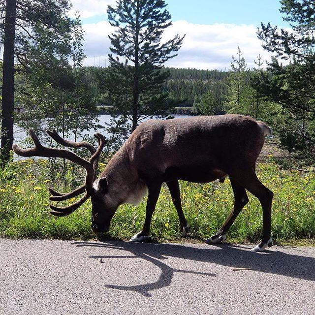 Die schwedische Variante der Verkehrsberuhigung….